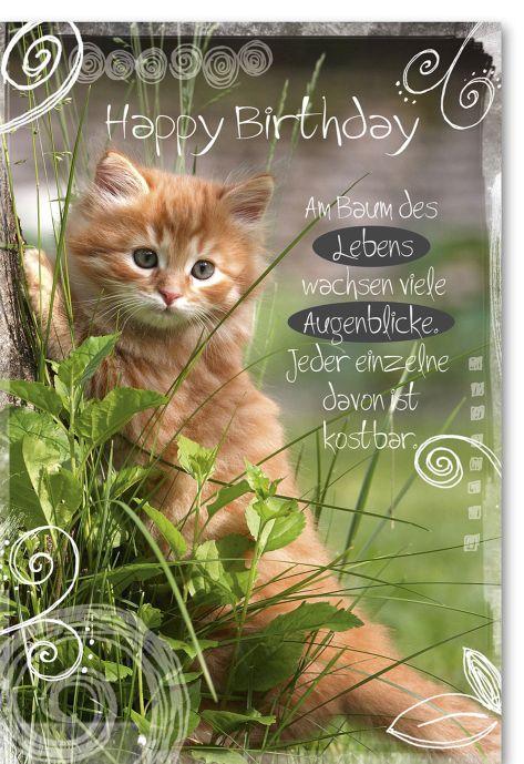 Geburtstagswunsche Katze Wunsche Zur Geburtstag
